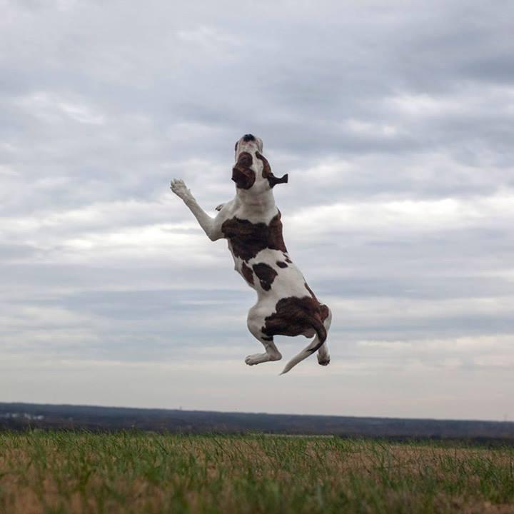 Shannon-Johnstone-landfill-projeto-fotografia-cachorros-07