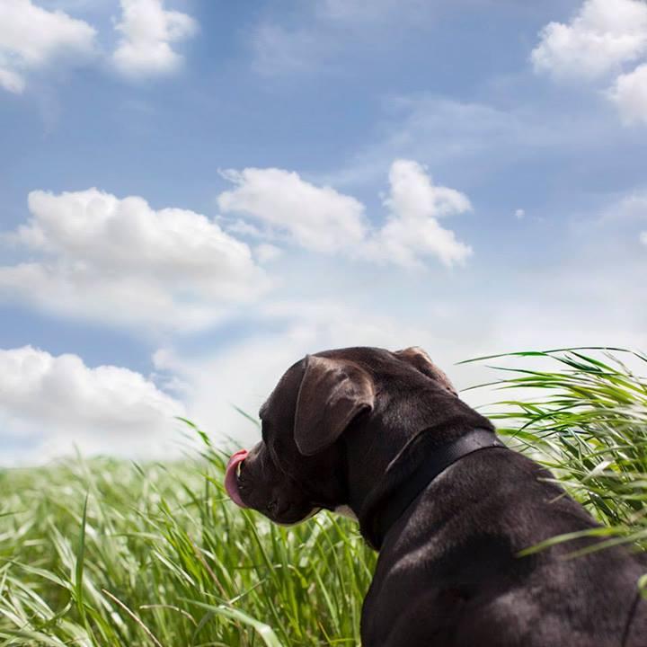 Shannon-Johnstone-landfill-projeto-fotografia-cachorros-08