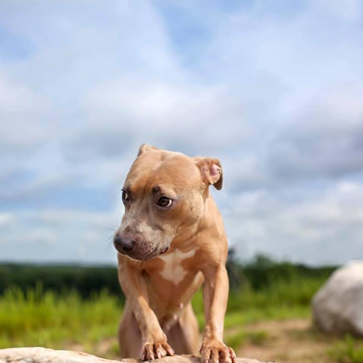 Shannon-Johnstone-landfill-projeto-fotografia-cachorros-09