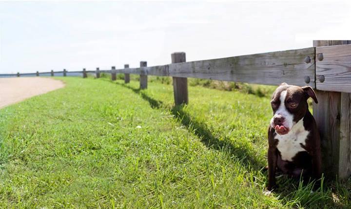 Shannon-Johnstone-landfill-projeto-fotografia-cachorros-10
