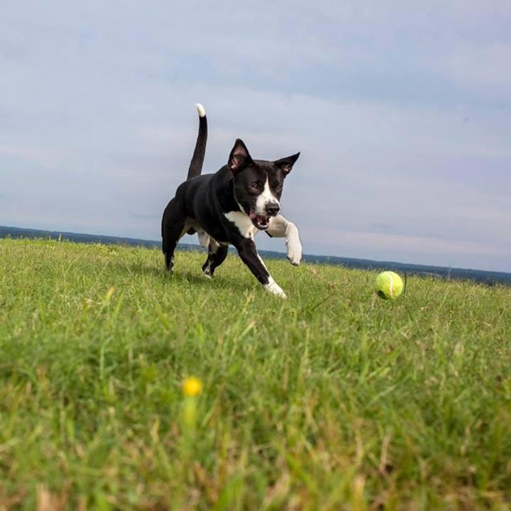 Shannon-Johnstone-landfill-projeto-fotografia-cachorros-11