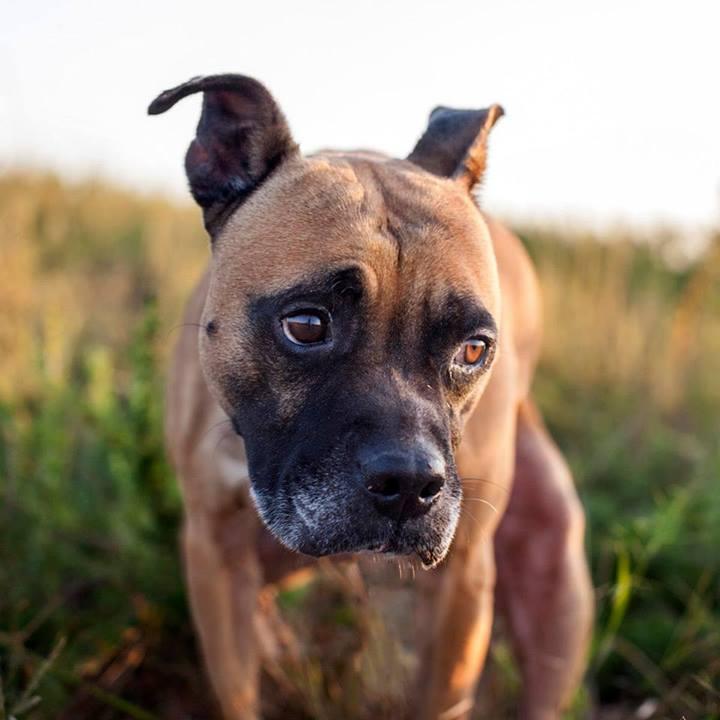 Shannon-Johnstone-landfill-projeto-fotografia-cachorros-12
