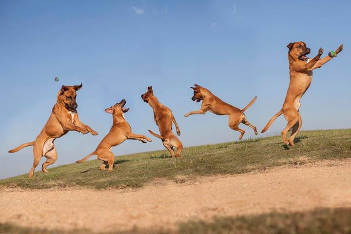 Shannon-Johnstone-landfill-projeto-fotografia-cachorros-13