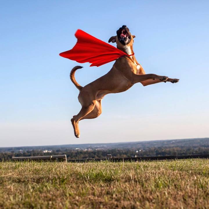 Shannon-Johnstone-landfill-projeto-fotografia-cachorros-14