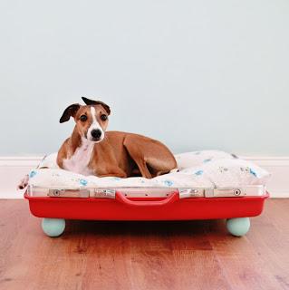 boas-ideias-cachorro (53)