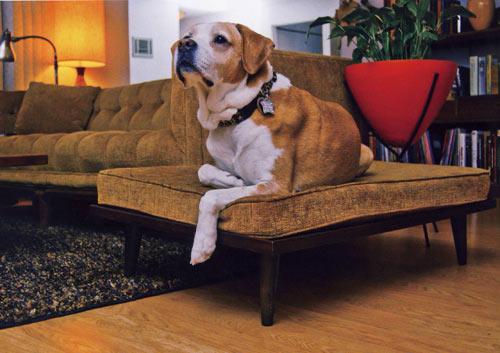 boas-ideias-cachorro (66)