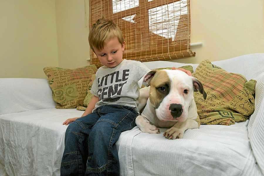 O menino Charlie e seu cachorro herói Buster. (Foto: Reprodução / Shropshire Star)