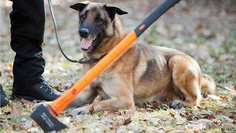 Cachorros policiais aposentados terão direito a pensão (Foto: Reprodução / BBC UK)