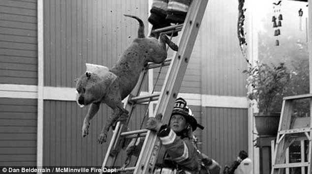 cachorros-escapam-fogo