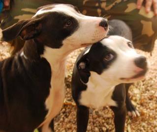 Jeffrey e Jermaine são irmãos inseparáveis a espera de um lar. Foto: Reprodução / Facebook