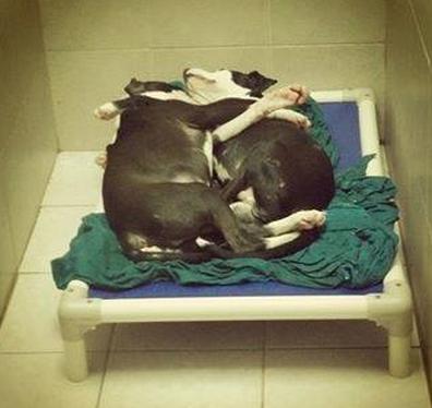 Os dois amam dormir 'abraçadinhos'. Foto: Reprodução / Facebook