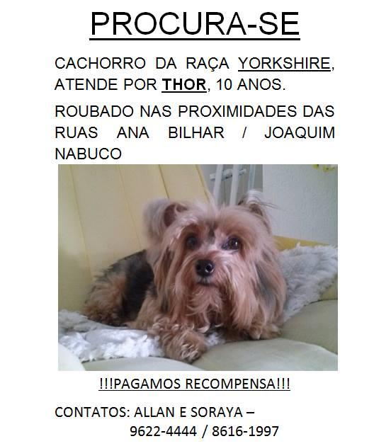Esse é o Thor, cachorro da raça Yorkshire Terrier de 10 anos que foi roubado de sua dona em Fortaleza - Ceará. Thor tem necessidades especiais e precisa cuidado. Foto: Reprodução/Facebook