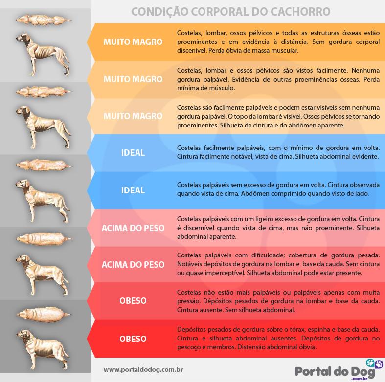 BCS. Foto: Gráfico Portal do Dog