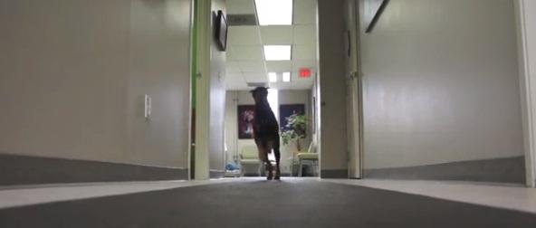 O cachorro Kenny andando novamente. (Foto: Reprodução / Dogster)