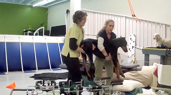 O cachorro Kenny quando chegou na clínica. (Foto: Reprodução / Dogster)