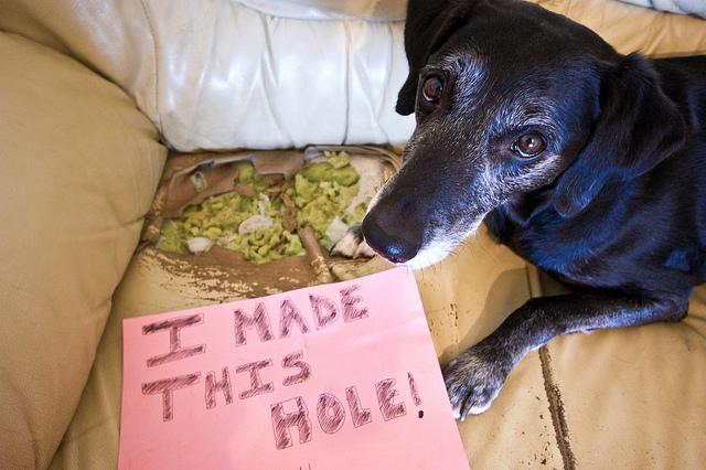 """""""Eu fiz esse buraco!"""" Foto: Reprodução/Google Images"""