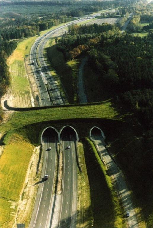 ecoduto-ponte-verde-animais-03