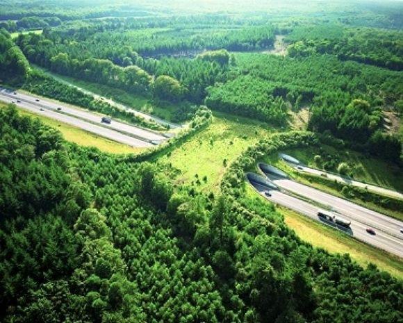 ecoduto-ponte-verde-animais-04