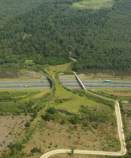 ecoduto-ponte-verde-animais-05