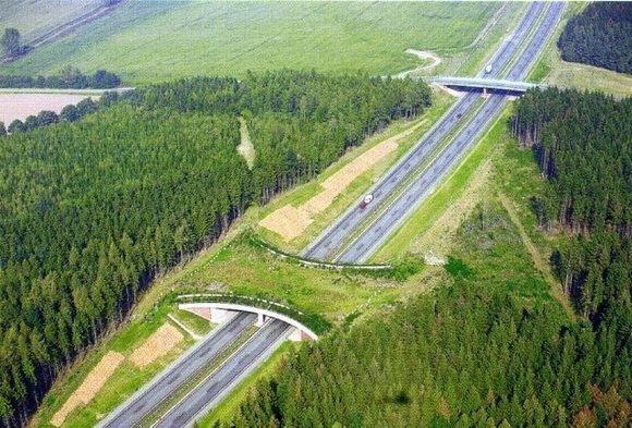 ecoduto-ponte-verde-animais-06