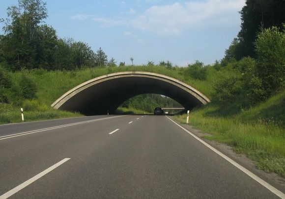 ecoduto-ponte-verde-animais-07
