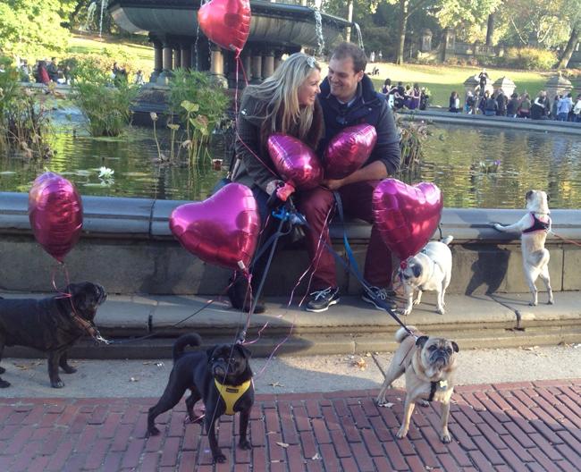 ed-alex-pedido-casamento-cachorros-pug-09