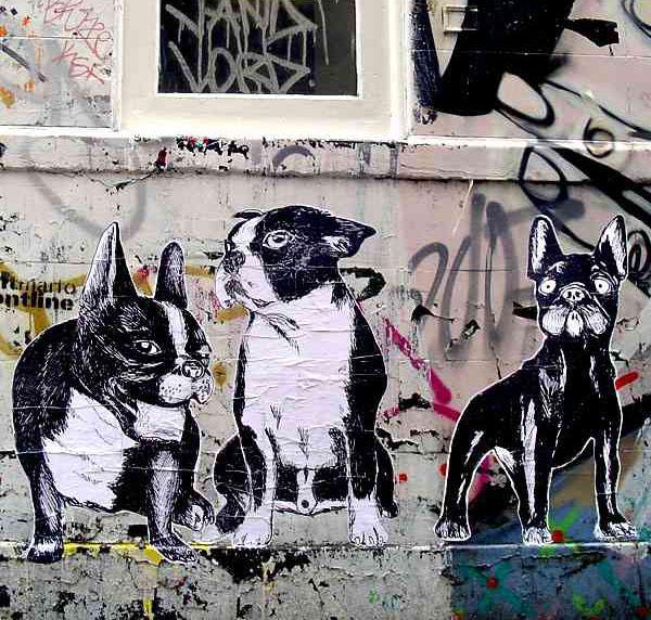 graffiti-artistas-rua-cachorro-02