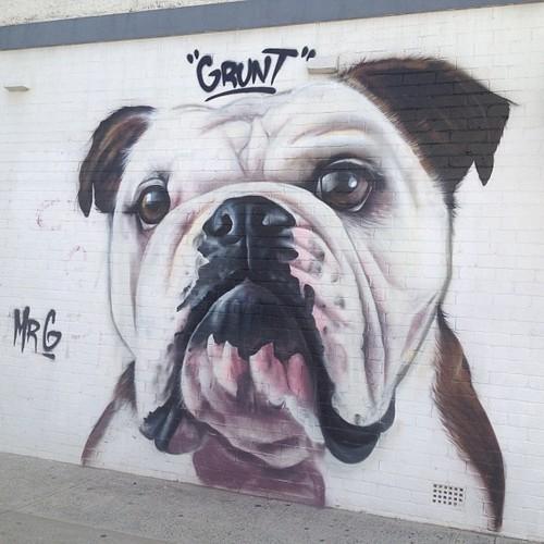 graffiti-artistas-rua-cachorro-20