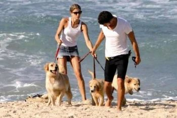 Cauã Reymond e Grazi Massafera disputam a guarda de seus cachorros (Foto: Reprodução / O Povo)