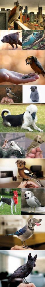 passaros-cachorros