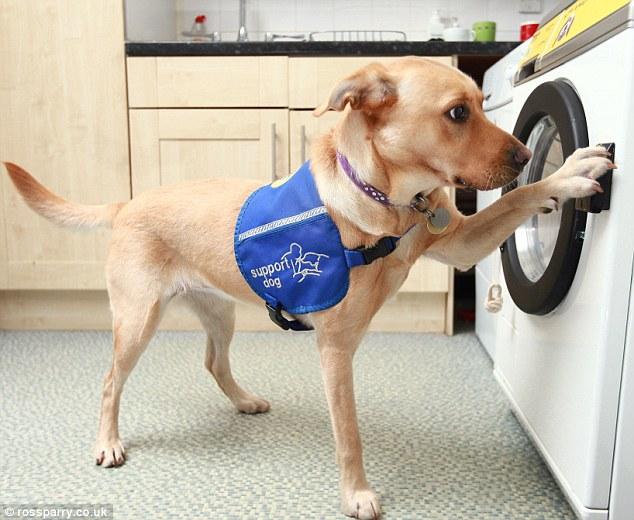 woof-machine-maquina-lavar-cachorro-01