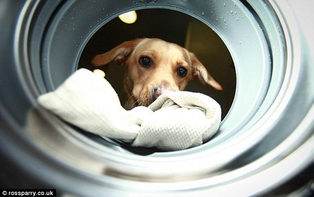woof-machine-maquina-lavar-cachorro-03