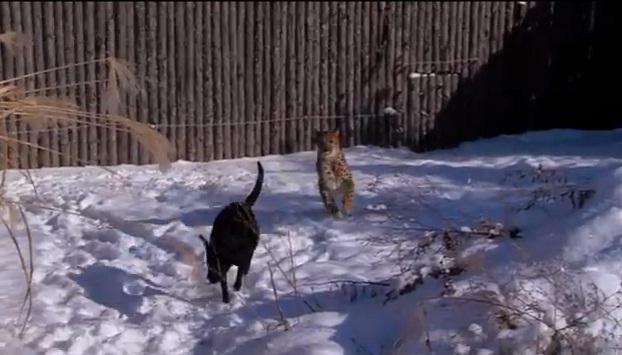 Guepardo e cachorro brincam em zoológico nos Estados Unidos. (Foto: Reprodução / Youtube)