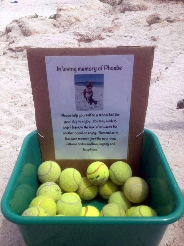 Homenagem à Phoebe. Foto: Reprodução/Facebook