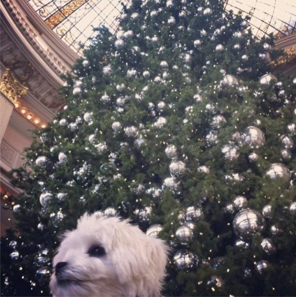 A cachorra Cali da atriz Fernanda Machado. (Foto: Reprodução / Instagram)