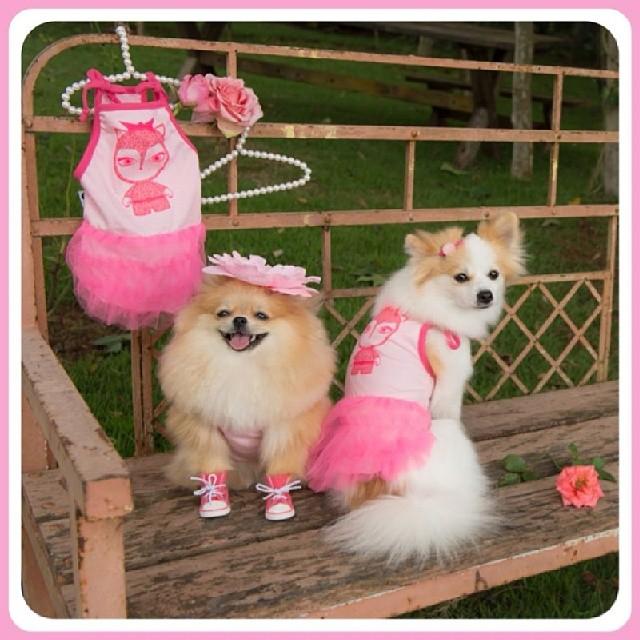 As cachorras Fóff e Doll com roupinhas da coleção Joy Art. (Foto: Reprodução / Instagram)