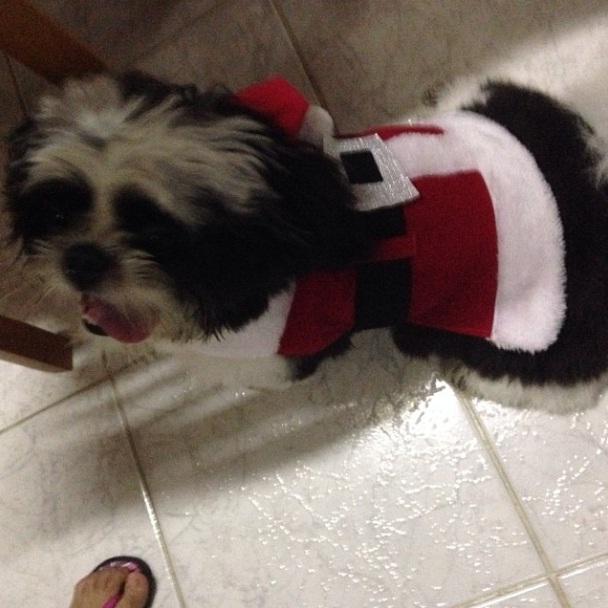 O cachorro Alfredo da cantora Anitta se vestiu de papai noel.  (Foto: Reprodução / Instagram)