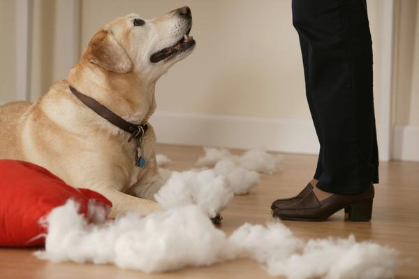 As suas atitudes podem deixar seu cão desobediente. (Foto: Reprodução / Google)