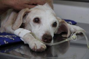 São Paulo terá novo hospital público para cães e gatos. (Foto: Reprodução / Site Roberto Tripoli)