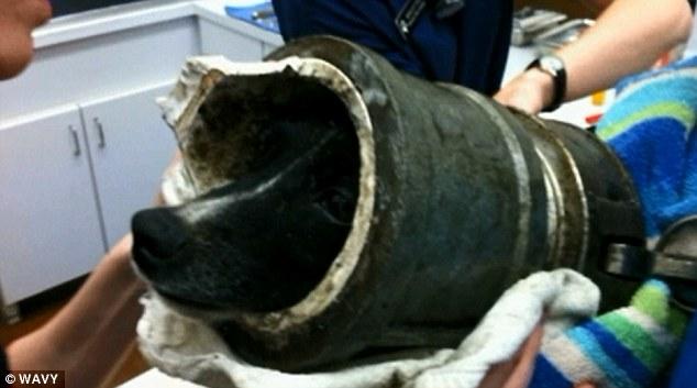 Os veterinários conseguiram tirar o tubo com segurança, após sedar o cachorro. (Foto: Reprodução / Wavy)