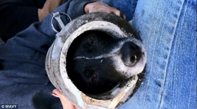 Cachorro ficou preso em tubulação de irrigação. (Foto: Reprodução / Wavy)