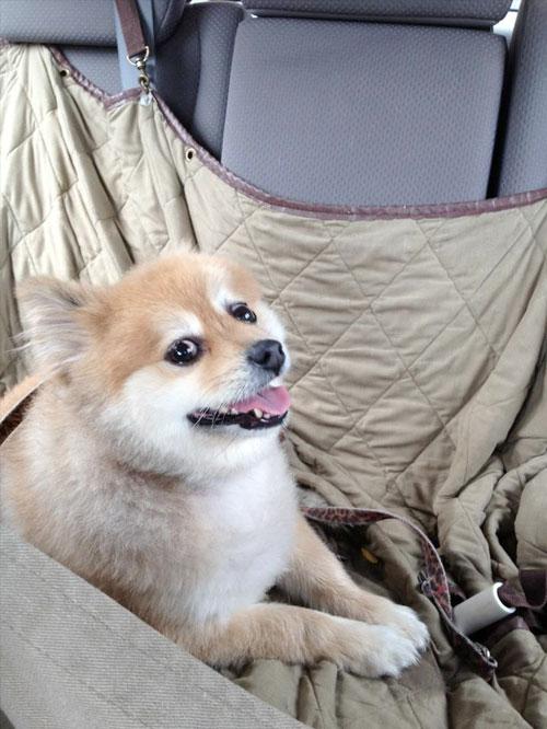 cachorros-abrigo-lar-1