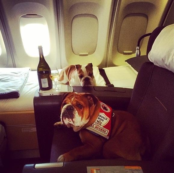 Cachorros de Lewis Hamilton viajando de primeira classe. (Foto: Reprodução / Instagram)