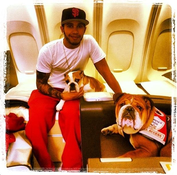 Hamilton e seus buldogues Roscoe e Coco no avião. (Foto: Reprodução / Instagram)