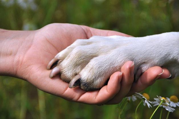 Os cães entendem os humanos. (Foto: Reprodução / Google)