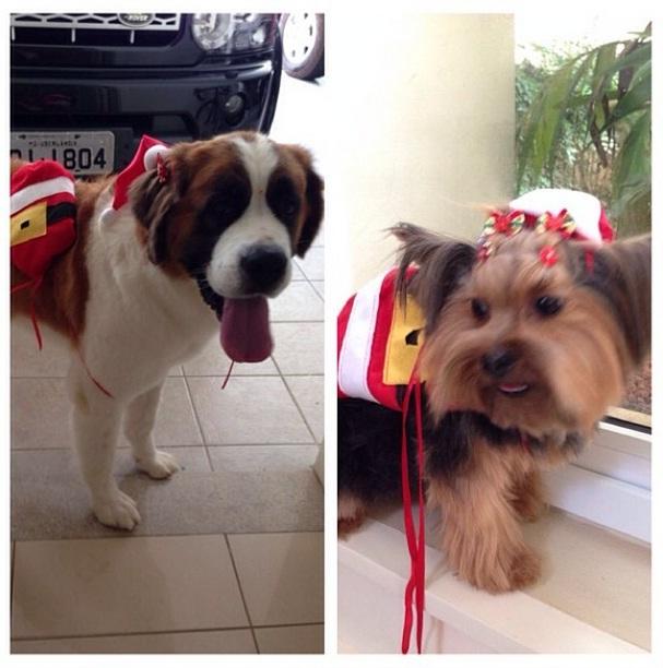 Cachorras do cantor Leo: Chalana e Nina. (Foto: Reprodução / Instagram)
