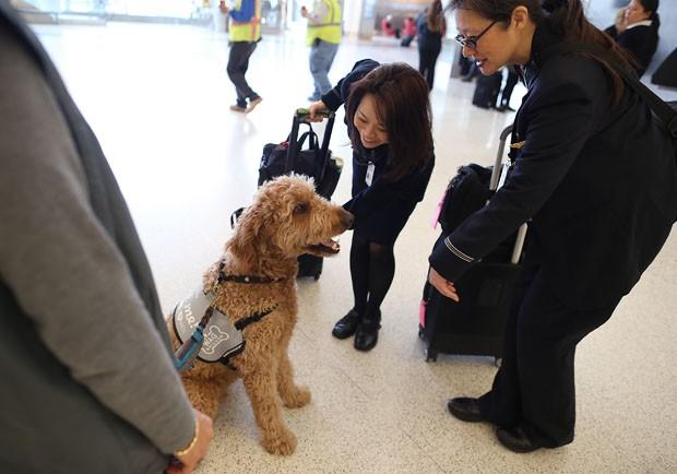 cachorros-servico-aeroporto-sao-francisco-02