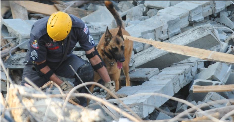 Cães auxiliam os bombeiros nas buscas por vítimas. Foto: Adriano Lima/Brazil Photo Press/Estadão Conteúdo