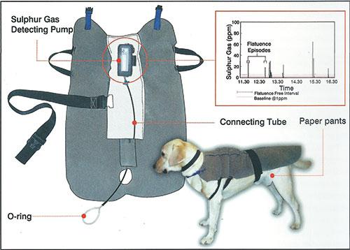 Casaco especial criado para o estudo de flatulência dos cachorros. (Foto: Reprodução / Waltham Science)