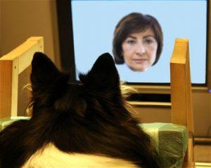 Estudo comprova que cães reconhecem o rosto de seus tutores. (Foto: Reprodução / Universidade de Helsinki)